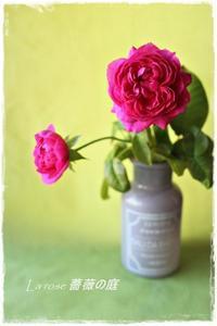 'アレゴリー'の三番花 - La rose 薔薇の庭