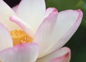 7.29 - anemone