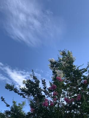 20210728 夏のお日様に百日紅伸びて - gallery円山ステッチ & 佐野明子のblog