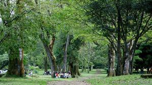 コスタリカ背景のサンホセ東公園はまるで植物園 - とことん写真