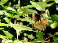 令和3年 信州遠征 2日目 4 - 紀州里山の蝶たち