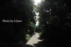 房総半島の旅(2021年7月) - 海を歩くゲンゴロウ