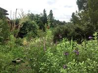 ブログ10年の忘備録/ハーブ菜園 - ちょっと田舎暮らしCalifornia