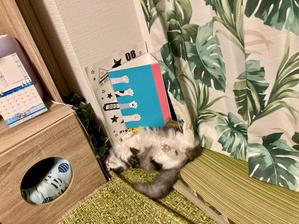 【ねこ部屋通信】真夏の猫写真館。 - ネコトバイク2 -日本独走☆-