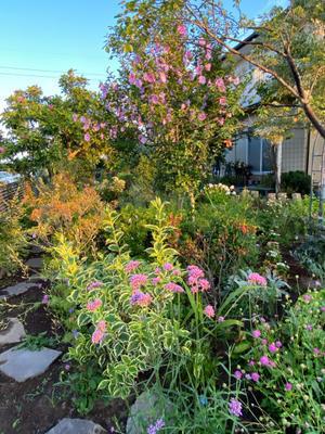 夏の朝 - ららのお庭