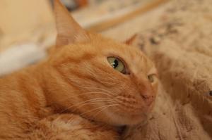 「2度めのワクチン接種で無力化した飼い主には猫もわがままを言わない」 -