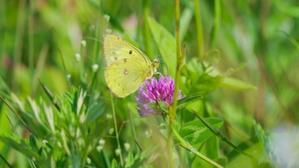 夏の蝶。 - ゆっくり東京DAYS