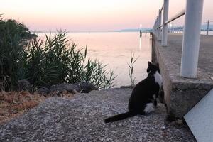猫かわいい夕焼けの湖と歯医者はつらいよ - イタリア写真草子