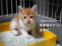 【過去ログまとめ】保護猫みちくん成長記 - SAMのLIFEキャンプブログ Doors , In & Out !