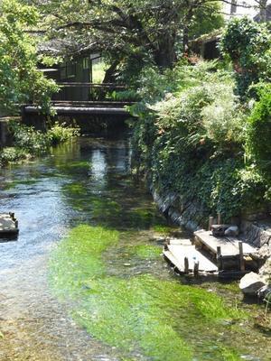 『湧水が集まり流れる地蔵川』 - 自然風の自然風だより
