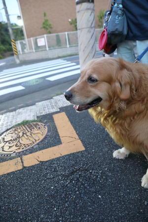 イーガイガ! - ハナ&ララとお散歩!