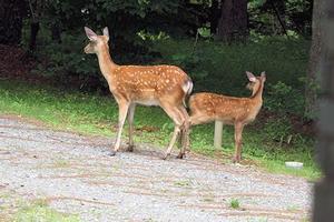 今日は鹿さん達とリスさん登場♪ - スモーキーと一緒に