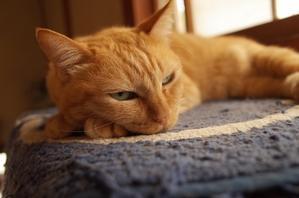 「猫は飼い主の容体を知っている」 -