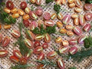 野菜の収穫 - sweet+