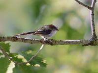 お山のエナガたち(ベランダにて)) - トドの野鳥日記