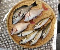 釣り人の食卓・・・釣りは責任ある遊び - 波止釣り放浪記 part3