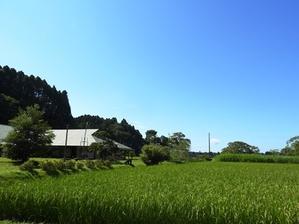 ナラ枯れ? - 千葉県いすみ環境と文化のさとセンター