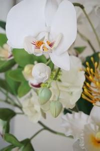 「頑張れ~!」 - m-Flowers.