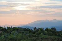 蓮の花の夜明け   九品寺 - 峰さんの山あるき