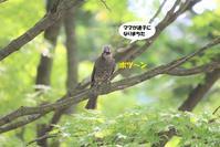ママが迷子になりました(笑) - わくわくバードウォッチング こんなの鳥ました