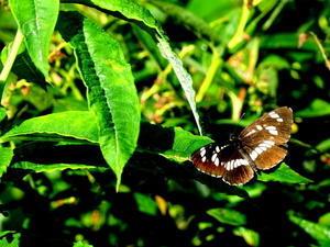 紀州里山の蝶たち