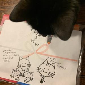 うち猫、お中元をもらう。 - 「にゃん」の針しごと