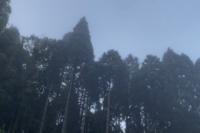 * 霧の朝 - * 雫 *