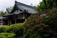 サツキ寺(近江八幡・雲迎寺) - 花景色-K.W.C. PhotoBlog