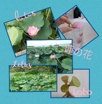 京都の蓮事情 (8/4) - ニャンコ座リポート  since 2005 April