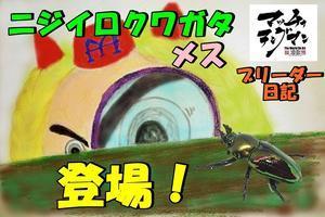 マッチョテングマンの!ブリーダー日記 【ニジイロクワガタ成虫メス登場!】んの巻 - Matcyo公式ブログ 爆裂