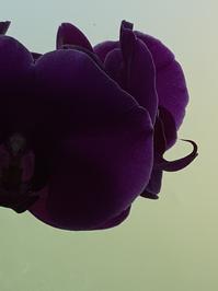 開花 - ダイアリー