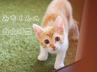 【保護猫みちくん成長記】みちくんの自由時間 - SAMのLIFEキャンプブログ Doors , In & Out !