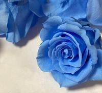 バラとジニアのフォトフレーム - グリママの花日記