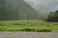 濡れそぼつ北山友禅菊 - Deep Season