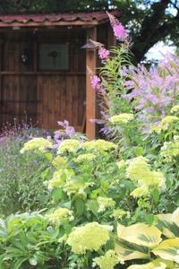 八重咲アナベル&青いウニ - ペコリの庭と時々パン