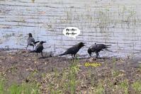 そろそろ甘えん坊は、卒業しましょう - わくわくバードウォッチング こんなの鳥ました
