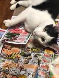 今日のタナ猫@お盆の支度のお手伝い - ひだまり・えんがわ