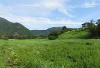 東海自然歩道(朝霧高原エリア) - 山の花、町の花