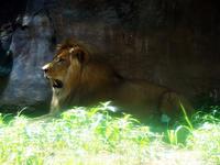 旭山動物園に行ってみた② - ほんじつのおすすめ