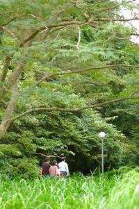 お盆と蓮、生きもの - 千葉県いすみ環境と文化のさとセンター