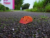 グズッてた雨が一段落 曇りの朝のサイクリング 紅葉した落ち葉 モミジバフウの蛙手♪ - 『私のデジタル写真眼』