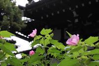 雨の散歩 - 写真の記憶