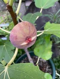 わたくしの果樹園 - ササイな日々