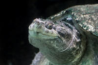 水生物園の生物たちと土砂降りの中のカワウ(井の頭自然文化園 June 2020) - 続々・動物園ありマス。