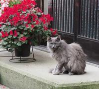 保護猫たち - 大山山麓、山、滝、鉄道風景