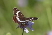 蝶と遊ぶⅡ - 上州自然散策3