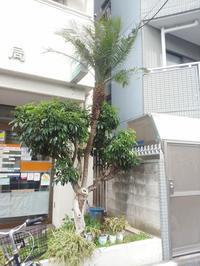 お盆は過ぎたので盆栽。 - 斉藤竜明の寄り道