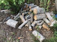 薪作り・・クルミの木。 - あいやばばライフ