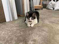 見守り猫 - 熊本の看板屋さん伊藤店舗企画のブログ☆ぶんぶん日記