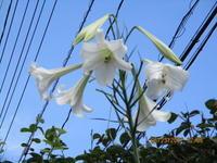 花 - 季節の写真